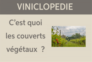 viniclopedie couverts vegetaux